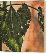 Buggilicious Wood Print