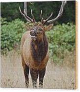 Bugler Wood Print