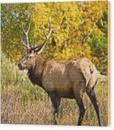 Bull Elk Autum Portrait Wood Print