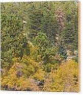 Bull Elk Lake Crusing With Autumn Colors Wood Print