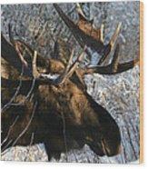 Bull In The Brush Wood Print