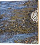 Bull Kelp Bed Wood Print by Bob Gibbons