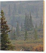 Bull Moose In Alaska Wood Print