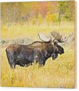Bull Moose In Autumn Wood Print