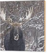 Bull Moose In Winter Wood Print