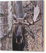 Bull Moose Stare Down Wood Print