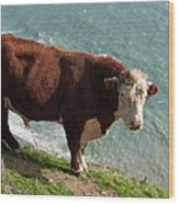 Bull On The Edge Wood Print
