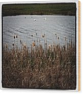 Bull Rushes And Swans Wood Print
