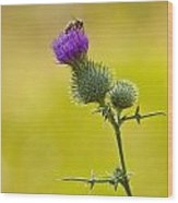 Bull Thistle With Bumble Bee Wood Print