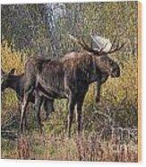 Bull Tolerates Calf Wood Print