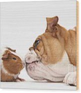 Bulldog & Guinea Pig Wood Print