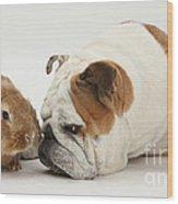 Bulldog And Lionhead-cross Rabbit Wood Print