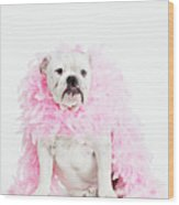 Bulldog Wearing Feather Boa Wood Print