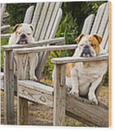 Bulldogs Relaxing At The Beach Wood Print