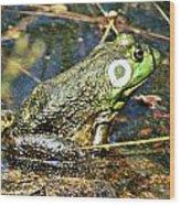 Bullfrog 1 Wood Print