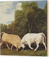 Bulls Fighting Wood Print