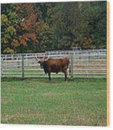Bully Bull Wood Print