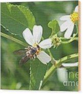 Bumble Bee 1 Wood Print