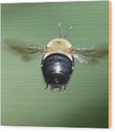 Bumble Bee 3 Wood Print