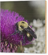 Bumble Bee And Bristle Thistle Wood Print