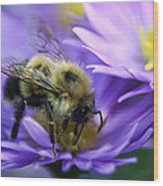 Bumble Bee And Fall Aster Wood Print