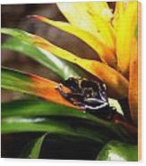 Bumble Bee Dart Frogs Wood Print