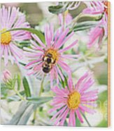 Bumble Bee On Asters Wood Print