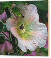 Bumble Bee Pollen Collector  Wood Print