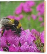 Bumble Bee Searching The Pink Flower Wood Print
