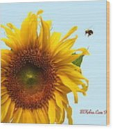 Bumble Bees Love Sunflowers Wood Print