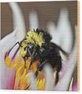 Bumblebee Attacking Flower Wood Print