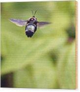 Bumblebee Midair Wood Print