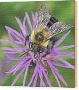 Bumblebee On A Purple Flower Wood Print