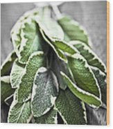 Bunch Of Fresh Sage Wood Print by Elena Elisseeva
