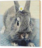 Bunny Wood Print by Falko Follert