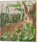 Bunny Playing Hide And Seek Wood Print by Maureen  McDonald