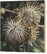 Burdock With Spiderweb Wood Print