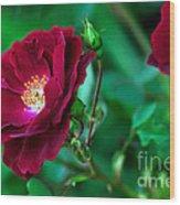 Burgundy Iceberg Rose Wood Print