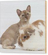 Burmese Kitten And Rabbit Wood Print