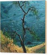 Burned Oak Tree Calabasas Wood Print