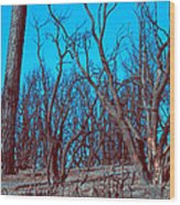 Burned Trees And The Sky Wood Print
