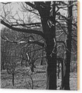 Burned Trees Wood Print