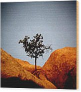 Burning Bush 2 Wood Print