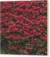 Burning Bush Wood Print