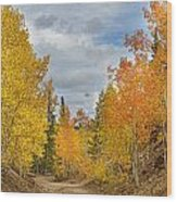 Burning Orange And Gold Autumn Aspens Back Country Colorado Road Wood Print