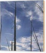 Burnt Trunks Of Black Spruce, Boggy Wood Print by Darwin Wiggett