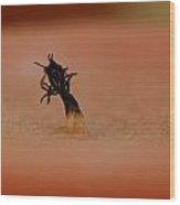Burnt Wick Wood Print