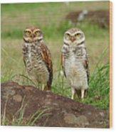 Burrowing Owl Wood Print by Antonello