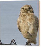 Burrowing Owl On Fence Alviso California Wood Print