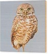Burrowing Owl V Wood Print